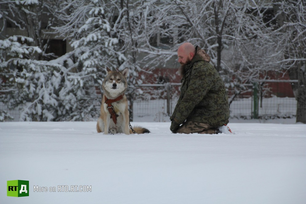 Keeping a wolf as a pet