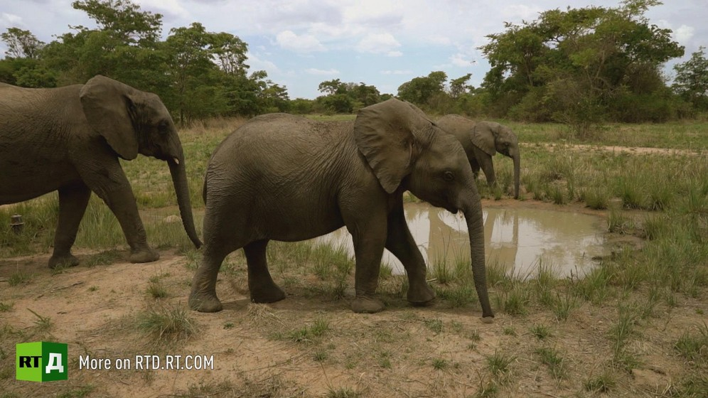 orphaned baby elephants in Zimbabwe wildlife sanctuary