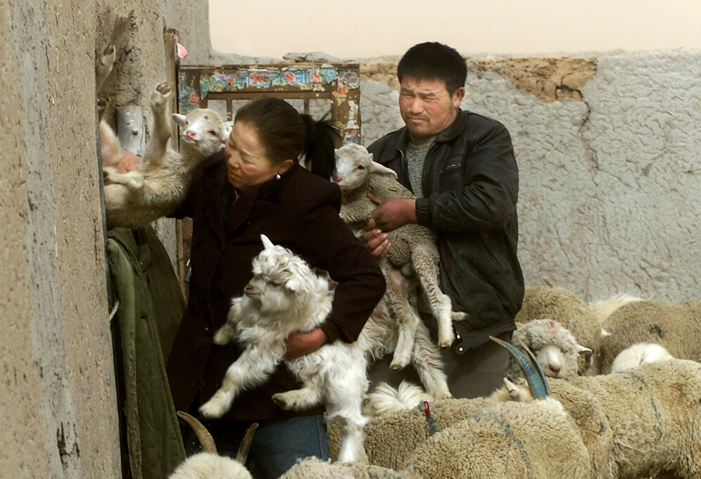 Bubonic plague confirmed in China: Is the agent of the ...
